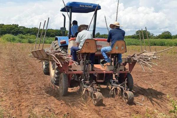 Secretaria da Agricultura renova área de vitrine de mandioca no Centro Agrotecnológico de Palmas