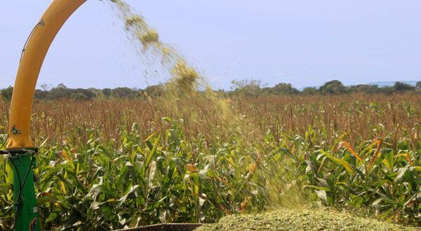 Prefeitura de Santa Tereza é parceira de agricultores na produção de Silagem